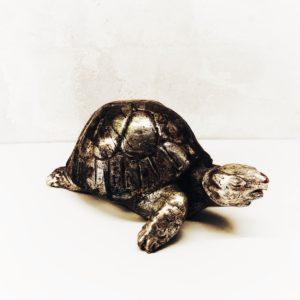 tartaruga-legno-castorina-artempo-lato-2